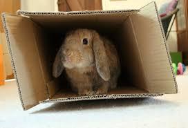 rabbitinbox
