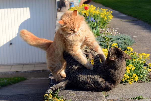 catfight 1