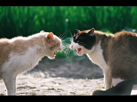 catfight 2